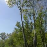 Cottonwood 8 (8)